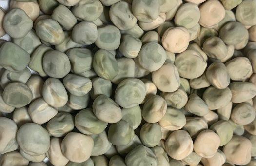 Marrowfat Field Pea